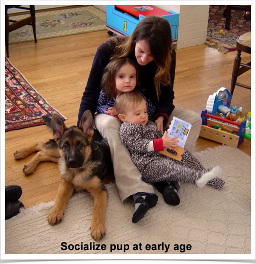 Socialize pup with kids