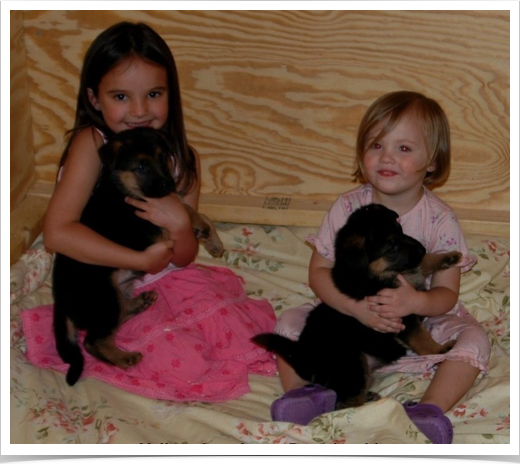 Granddaughters 5 wk old pups