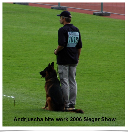 Andrjuscha bite work 2006 German Sieger Show